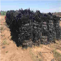 5000 Ton LDPE Agricultural Drip Tape Scrap for Sale @ 450 AUD