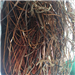 Supplying 20 Tons per Month Copper Wire Scrap