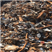 Shredded Steel Scrap for Sale
