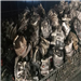 Monthly Supply: 10 Tons Alternator Scrap